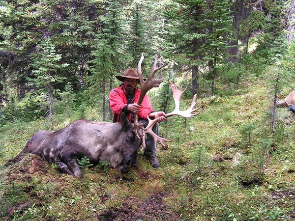 2009 Stewert Fraser, Itcha Mountain Caribou